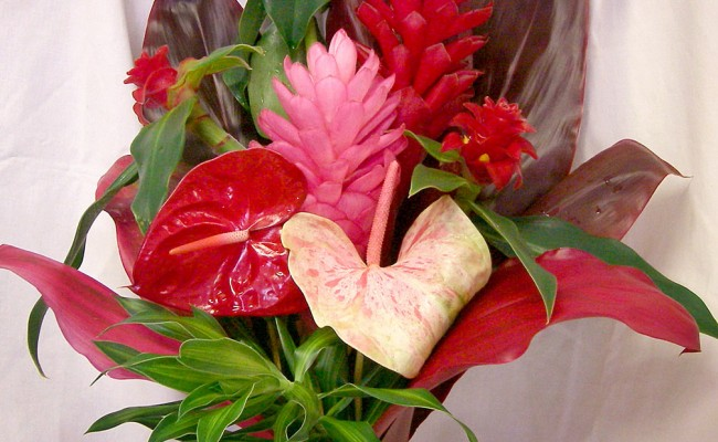 Happy Valentines Day! Hau'oli la Aloha! (Happy Day of Love)