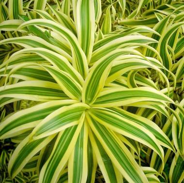 The Poipu Tropical Bouquet