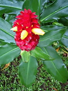 Tropical Spring Special