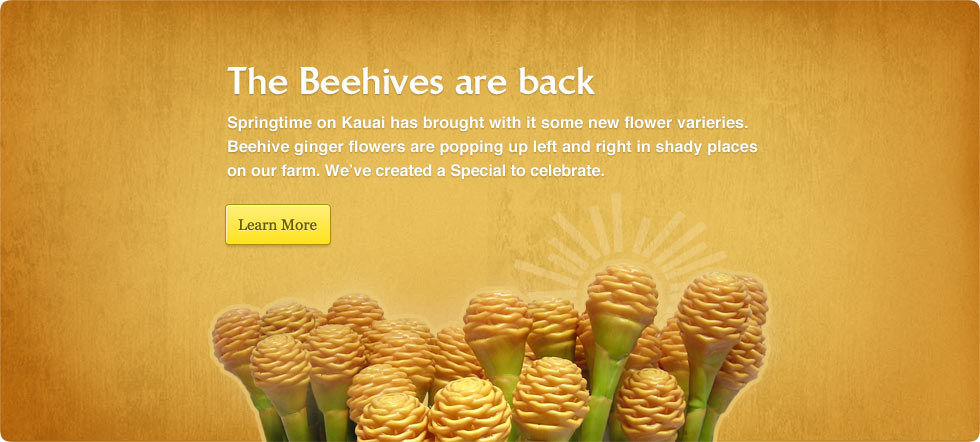 Beehive Gingers