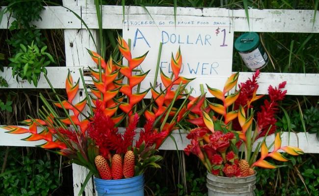 Support the Kauai Food Bank
