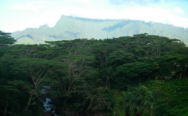 Clear morning light over Mt. Wai'ale'ale