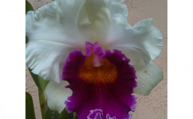 Beautiful Orchids in Bloom