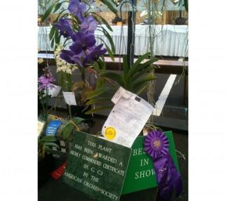 Keith Do's Vanda orchid