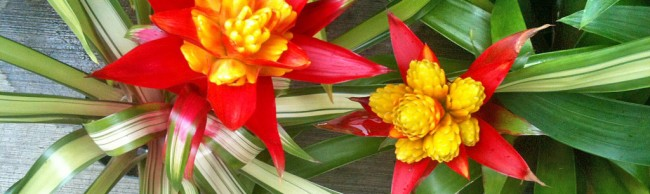 Learn about Bromeliads